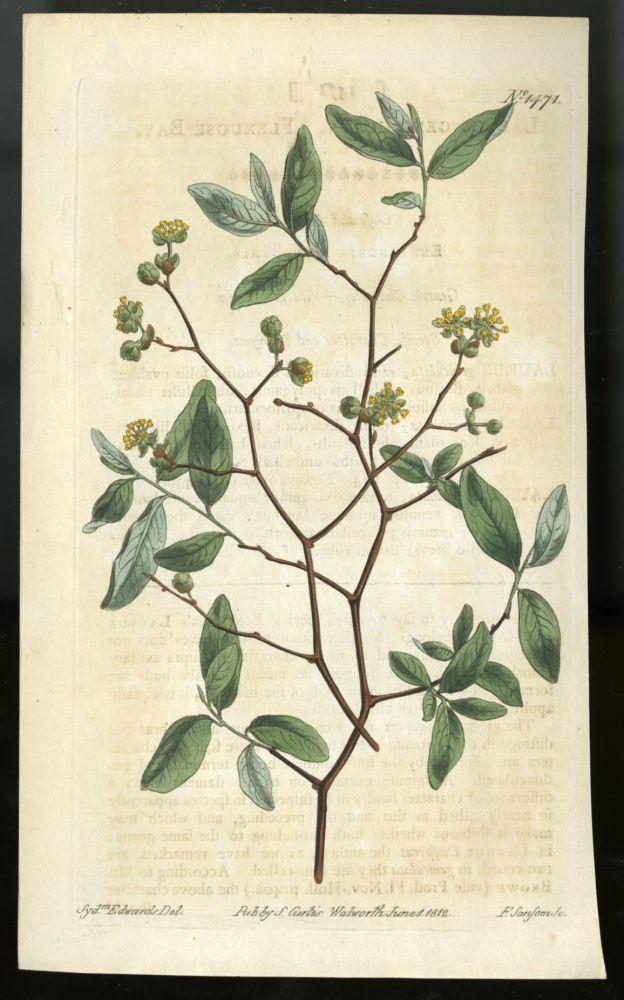 Pondspice Plate no. 1471 [from Curtis's Botanical Magazine]. Curtis William.