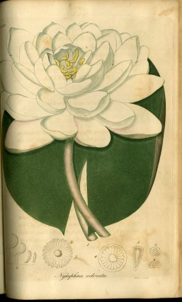 American Medical Botany, Being a Collection of the Native Medicinal Plants of the United States, Containing their Botanical History and Chemical Analysis, and Properties and Uses in Medicine, Diet and the Arts, with Coloured Engravings