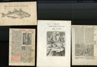 Specimens of Woodcuts and Engravings: A Portfolio of Original Leaves Taken from Rare and Notable Illustrated Books