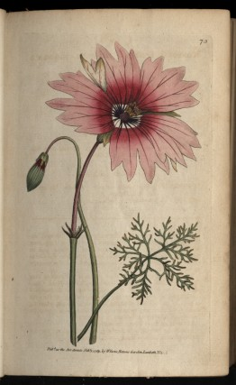 The Botanical Magazine; or Flower-Garden Displayed Volume III & IV