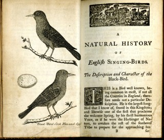 A natural History of English Song-Birds